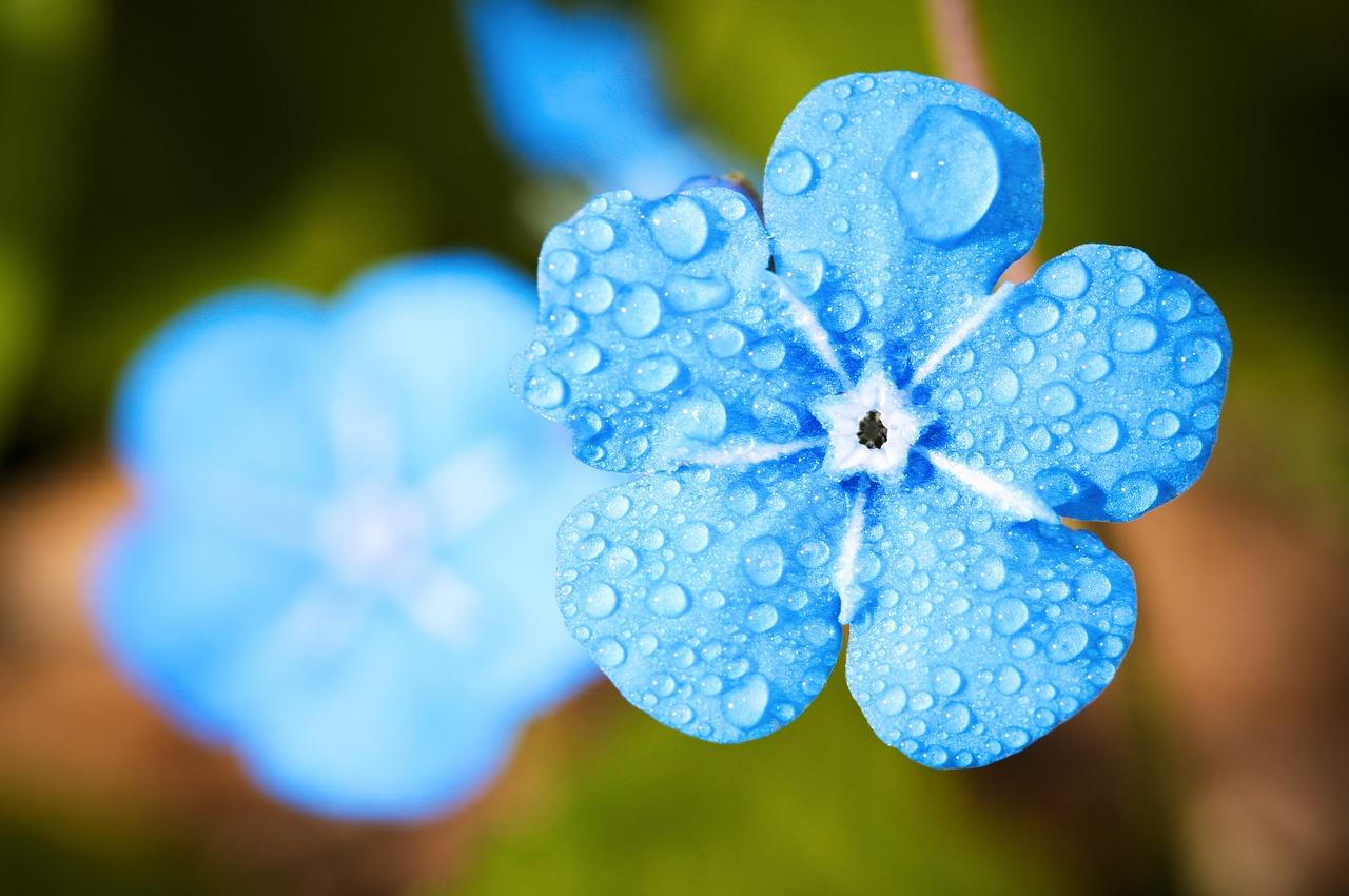 【幸せに生きる】あなたは「雨」をどう捉えるか?